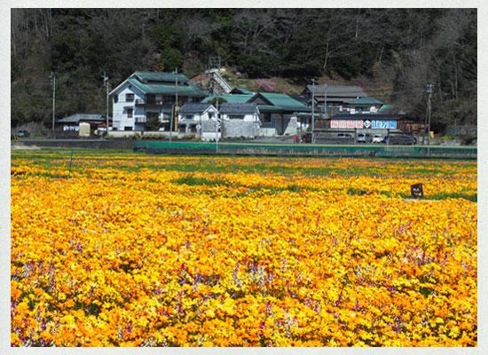 桜田温泉 山芳園/花畑